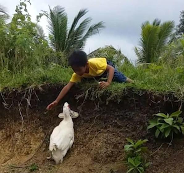 男孩鞋子掉泥里,熱心鴨子幫忙撿回。「網友:超暖心的鴨子。」-Dog Time